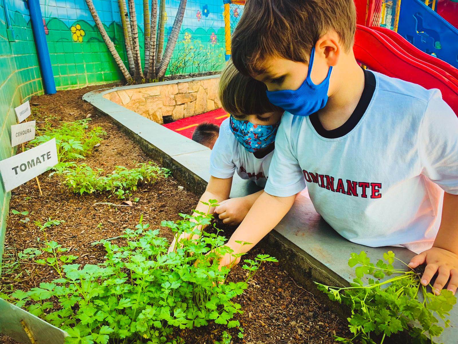 Aprendendo sobre as plantas